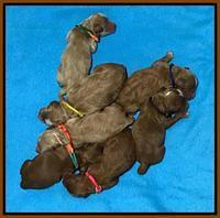 Ashby Grover pups newborn 130
