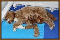 Ashby Grover pups newborn 141