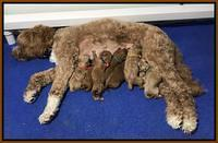 Ashby Grover pups newborn 330