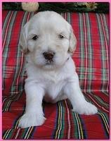 Bailey Rocco puppies 3 weeks old 016