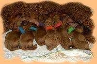 Bries newborn puppies 7 26 09 004