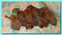 Bries newborn puppies1 7 26 09 008