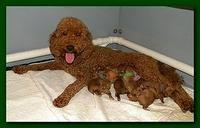 Bries puppies 1 day old pink hearts mom 002