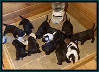 Caymen Solo 4 wks old group 1
