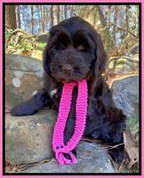 "Cordova family: ""Charlee"" 8 week weight: 11 lb 3 oz"