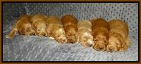 Prim Benz pups 2 wks old151