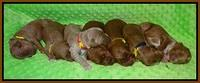 Prim and Benz pups 1 wk old151