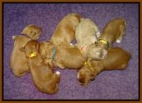 Prim and Benz pups 1 wk old161