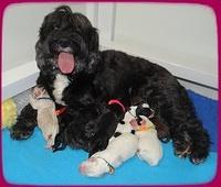Jetta Benz Newborn pups 21