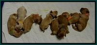 ST pups 5 days old group 1