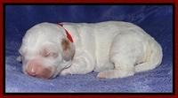 Jolie Buster pups 1 wk old 81