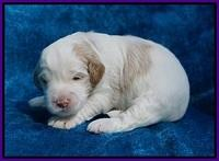 Laynie Benz pups 2 wks old 101