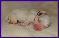 Laynie Benz pups Newborn 7112
