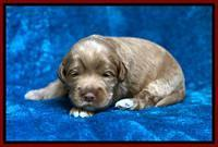 Laynie Benz pups 2 wks old 161