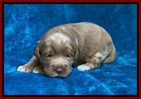 Laynie Benz pups 2 wks old 171