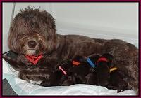 Coco Champ newborn pups 002