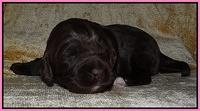 Xana Texas pups 2 wks old 003