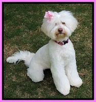 Sandra Dee 8 mos old new groom 101