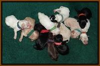 Jolie Texas Marco pups 1 wk old 21