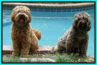 Blaze and Cherie by the pool 6 2012