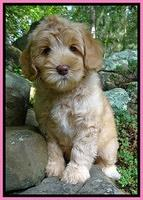 Individual puppy photo gallery