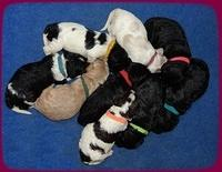 Paris Dempsey pups one wk old 33100