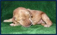Dreamer cash pups 1 wk old 11