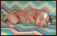 Callie Parson pups one week old 41