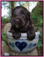 BB Marlow pups 4 wks old 111