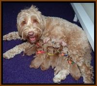 Millie Blaze pups newborn 21