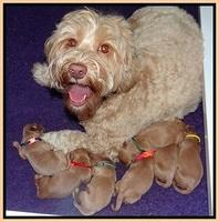 Millie Blaze pups newborn 31